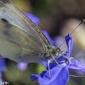 Macro photos - A butterfly