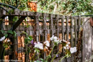 Minolta Dynax 505si Super sample pictures  - Fence