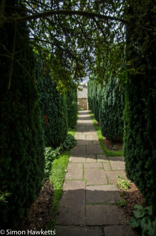 A pathway through fir trees at Snowshill Manor