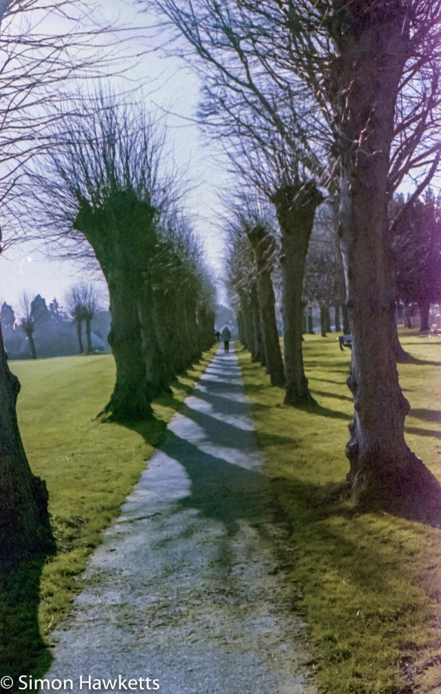 Digibase c41 processing results - Trees in Knebworth