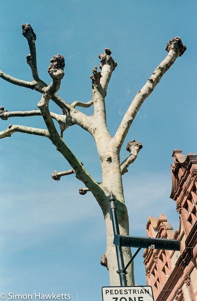 Minolta X-700 sample pictures - A tree in Reading town centre