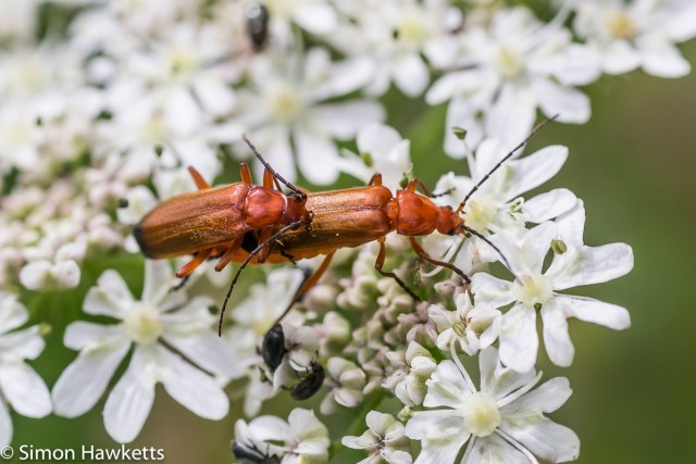Fuji X-T1 macro sample pictures - Insect love