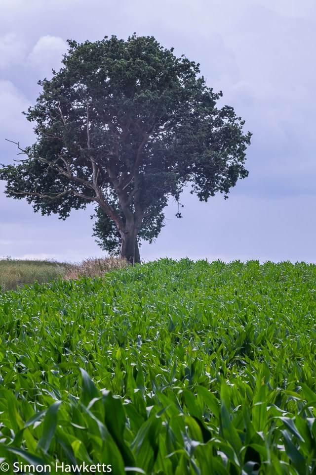 Fuji X-T1 macro sample pictures - Tree and crops