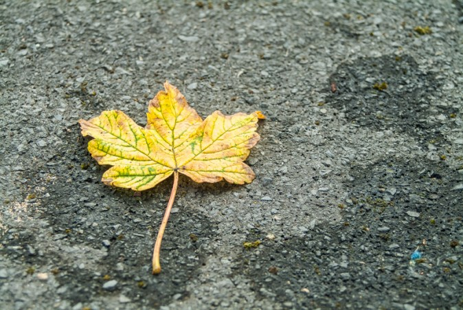 Fuji S2 Pro DSLR sample photos - Autumnal leaf
