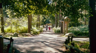 Elveden Forest Centerparcs on film - walking with mummy