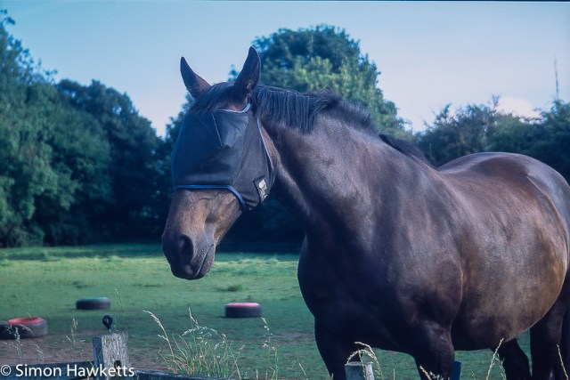 Precisa ct-100 colour  slide film pictures - A horse in Lincolnshire