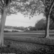 Weltaflex TLR camera sample pictures - two trees at Fairlands