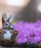 Carl Zeiss Jena Pancolar 50mm f/2 on Fuji X-T1 - Garden Rabbit