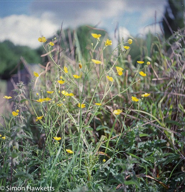 Ciro-Flex TLR sample pictures - Close up of wild flowers