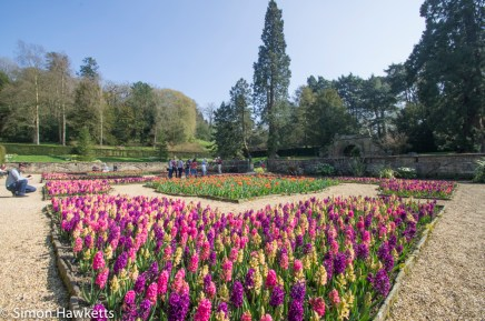 Chatsworth house pictures - super wide flowers by the maze