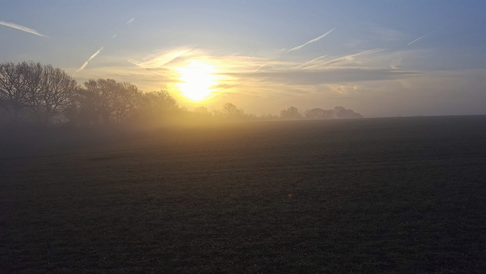 Misty Photos - Sunrise and Trees