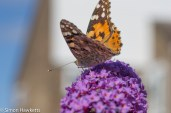 Tamron 90mm f/2.8 macro pictures - Butterfly