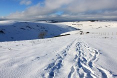 Lewes snow