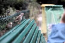 everywhere! Pigeons!!