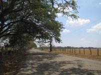 Costarican Sideroad