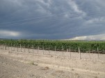 Stormy Wine Country