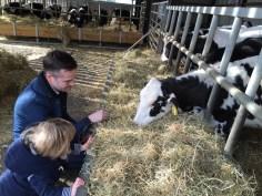 Tato and Roo meeting the calves