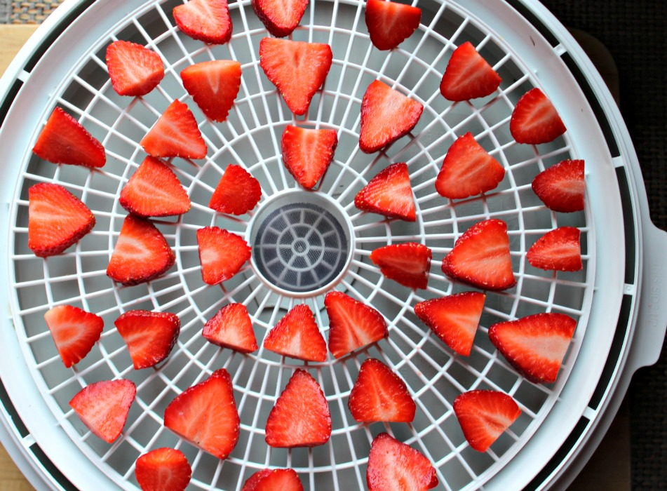Florida Strawberries ready to be dehydrated