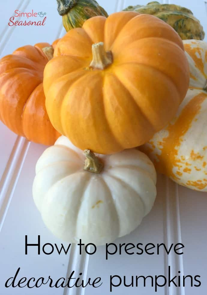 Make sure your pumpkins and gourds last all season long with this simple trick! via @nmburk