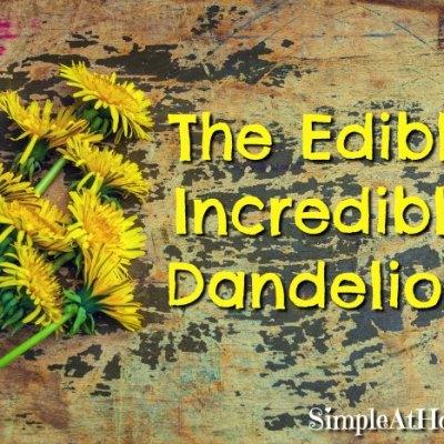 Amazing uses for dandelions