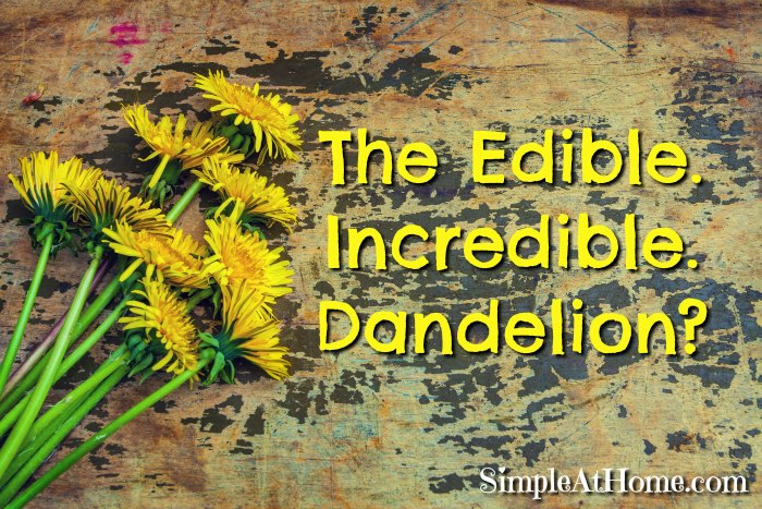 Amazing uses for dandelions