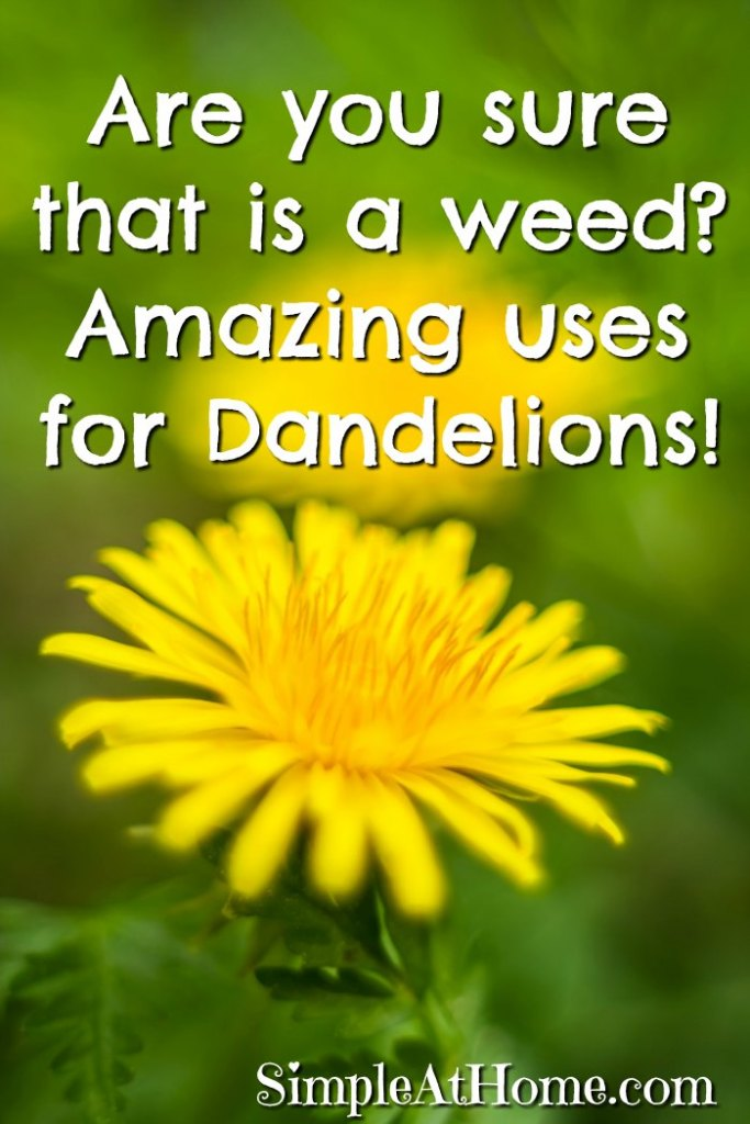 WOw I never knew how amazing Dandelions where