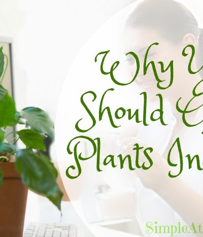 Want better health, less stress, and a more enjoyable home? Grow plants indoors! Who knew.