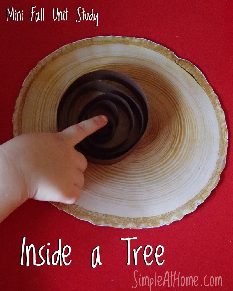 Take a look inside a tree with your kids.