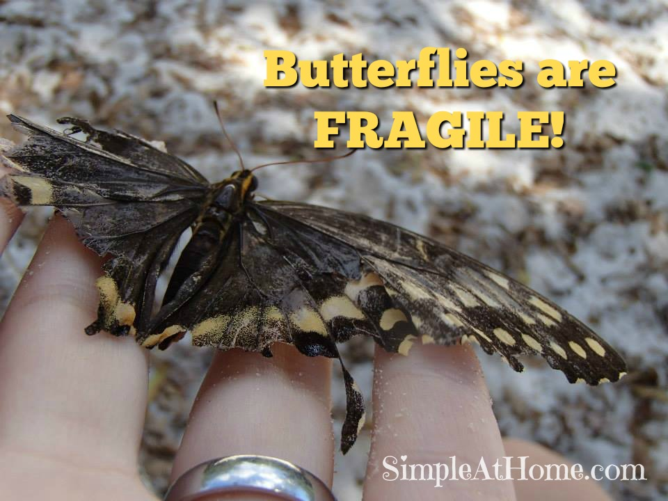 When going on a butteryfly house or butterfly garden field trip you MUST teach your children to not mess with the butterflies they are fragile.