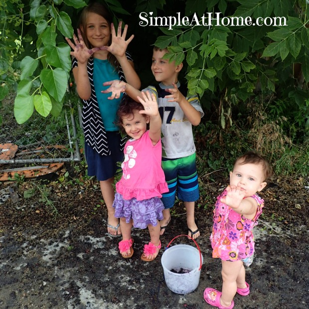 The Simple At Home Kids Blackberry Picking