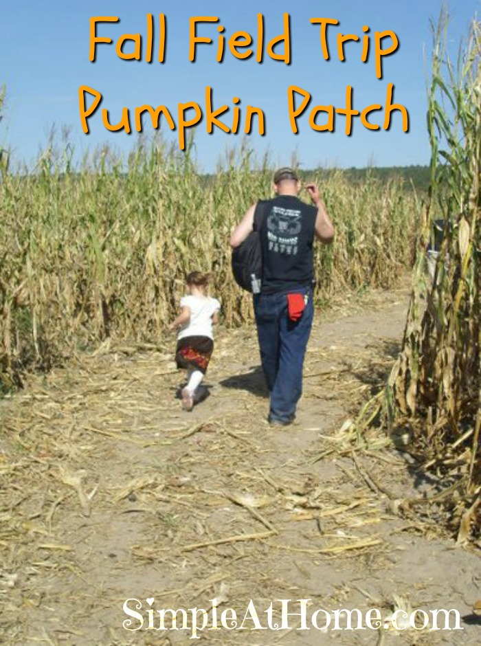 Looking for a fall field trip? Check out a pumpkin patch.