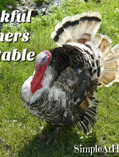 turkey unit study