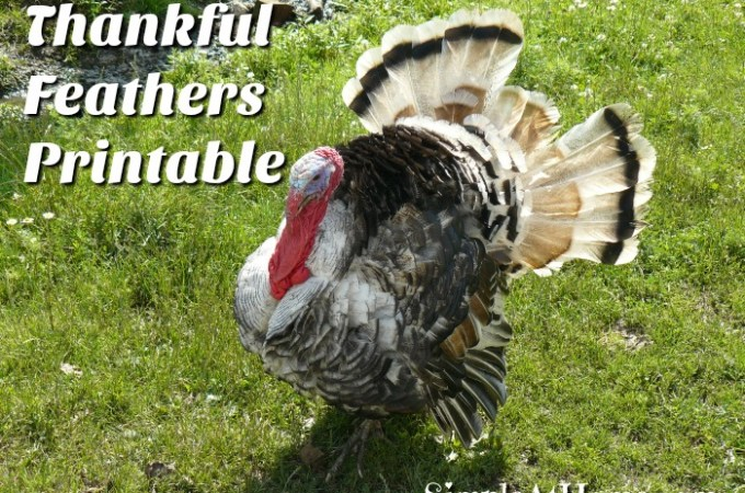 Thankful Feathers Printable