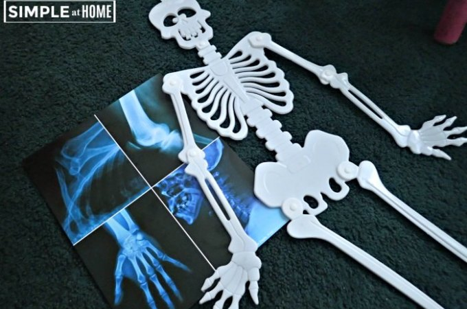 All About Bones Simple Homeschool Lesson Plans