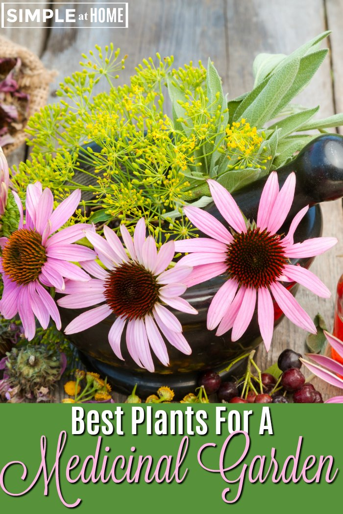 Best Plants For A Medicinal Garden