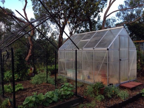 Fogged up Greenhouse