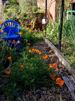 The path between the greenhouse and the garden beds always looks lovely at this time of year.