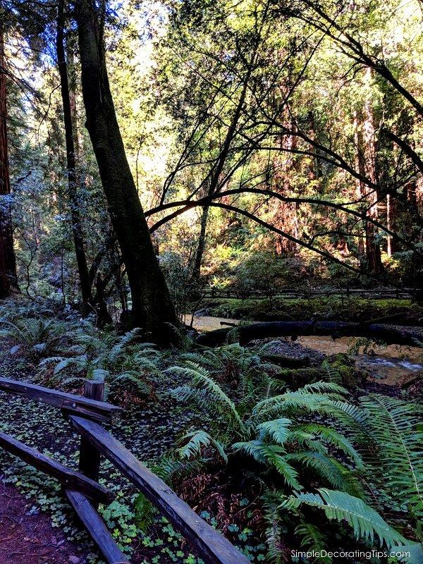 Day Trip to Muir Woods SimpleDecoratingTips.com