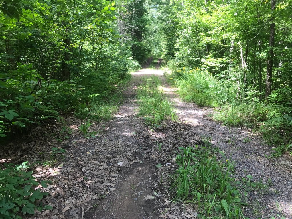 I love creating cycling adventure by finding fire or old logging roads. This adventure, though, was a bit more than I bargained for.