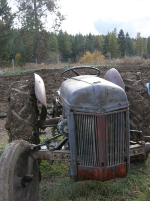 The tractor in the fall garden.