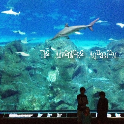 Fostering A Love Of Nature As A Family The Adventure Aquarium