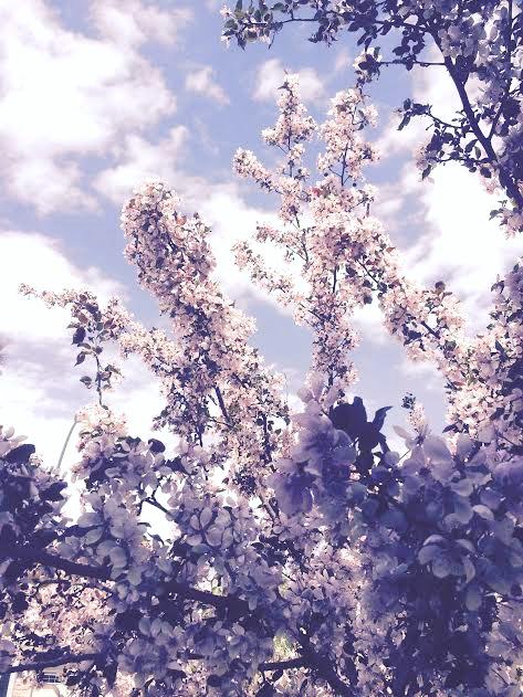 My Blossom Tree