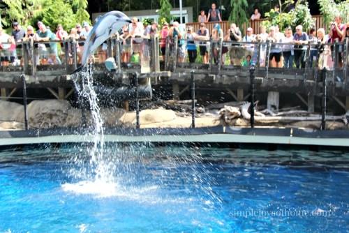 dolphin-at-vancouver-aquarium