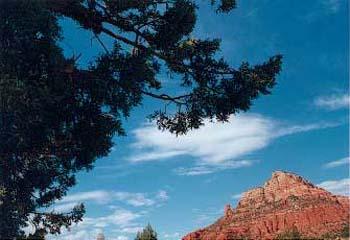 tree_mountain