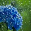 【ヒルナンデス】梅雨の悩み解消グッズ5万個の大ヒット商品とは