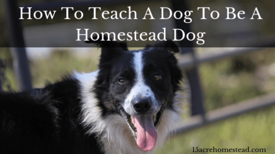 Homestead Blog Hop Feature - How-To-Teach-A-Dog-To-Be-A-Homestead-Dog