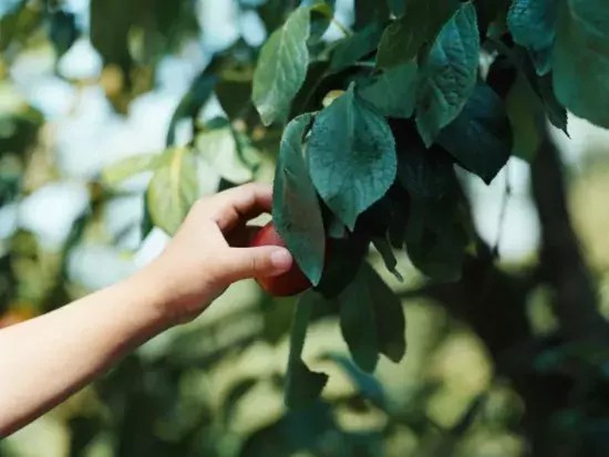 Homestead Blog Hop Feature - How Long Does it Take to Grow a Permaculture Food Forest