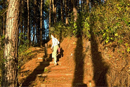 Jeannie walks up a trail in brilliant sunlight. The tall trees cast long shadows.
