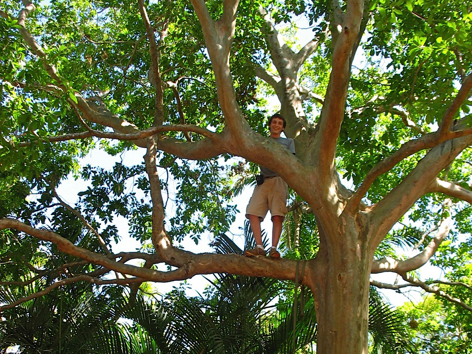 Peter Jacobs in a Guyaba Sura tree