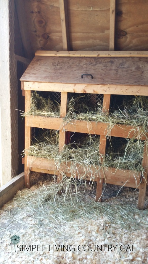 How To Prepare Your Chicken Coop For Winter